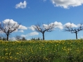 tre alberinuvola - 20140304_132034.jpg