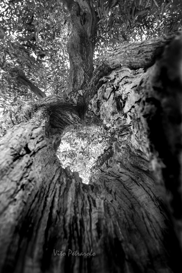 Il cuore al centro